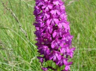 Les plantes sauvages de Saint-Gelais
